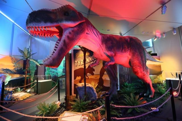Dinosaurs Around the World